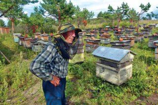 Как и для любого другого пчеловода, самое приятное для Петра Федоровича в работе— сбор медового урожая.